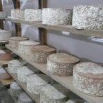Wheels of cheese from Northland Sheep Dairy in Marathon