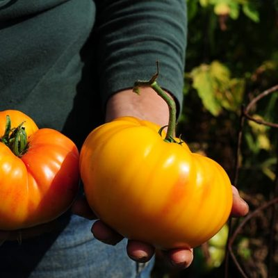 FOOD-FARM-WINE-ORGANIZATIONS.jpg