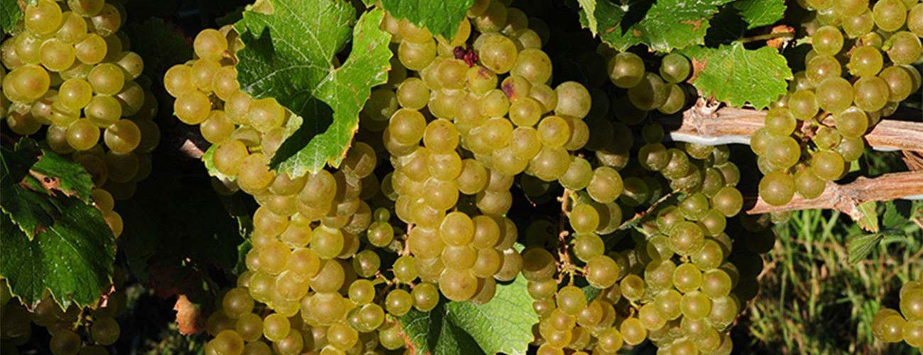 wineries-header.jpg